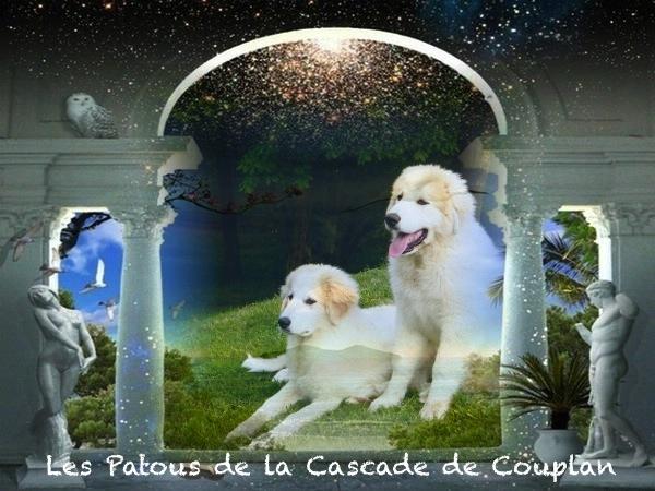 les_patous