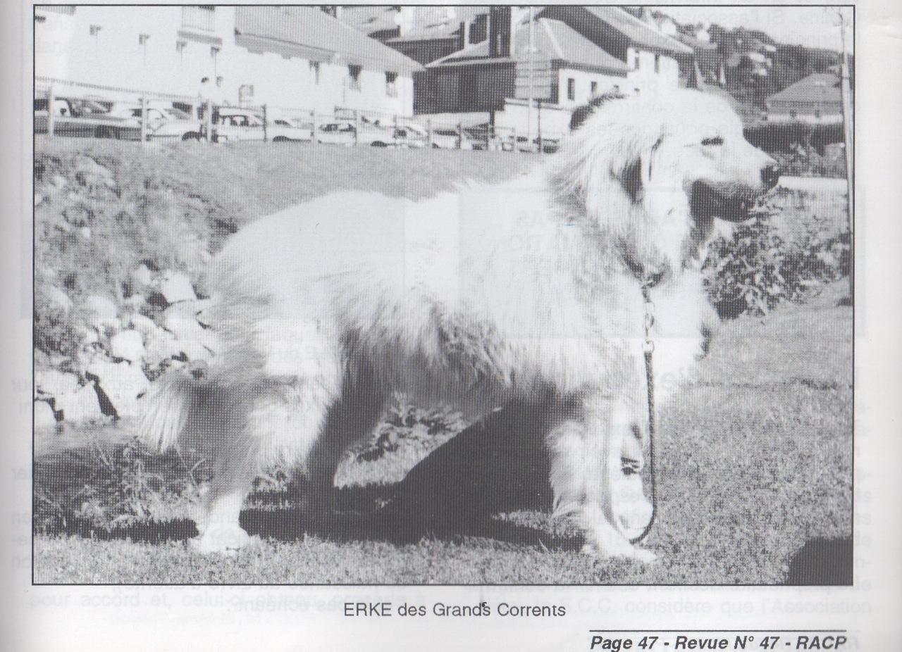 ERKE_DES_GRANDS_CORRENTS