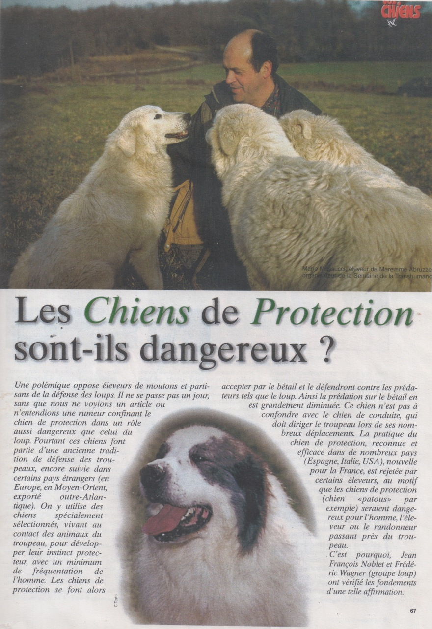 Patou_dangereux?