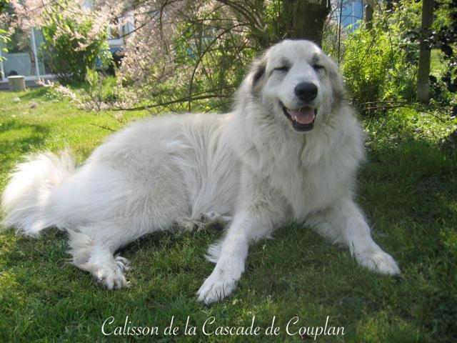1_CALISSON