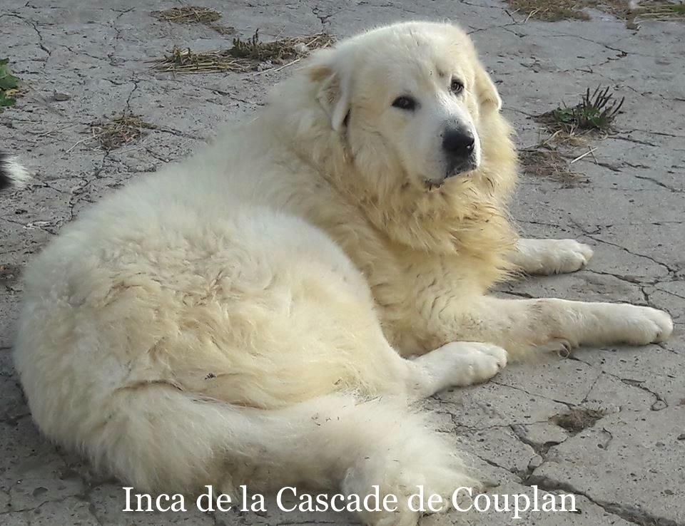 1_INCA