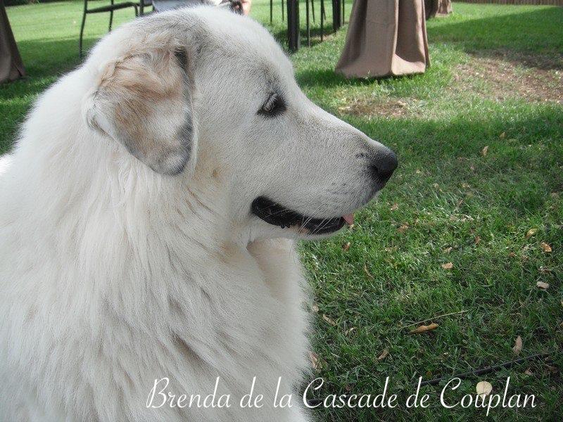 BRENDA-1