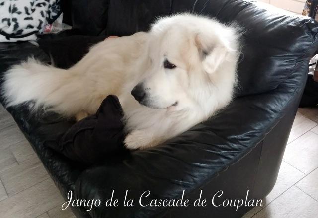 JANGO-1-1