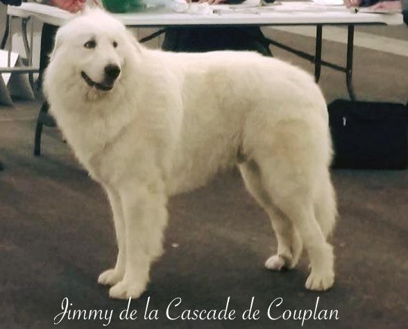 JIMMY-2