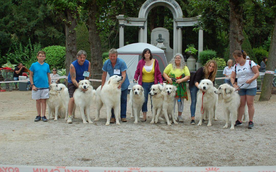 Exposition Canine Nationale, Le Puy-en-Velay 31 Juillet 2016