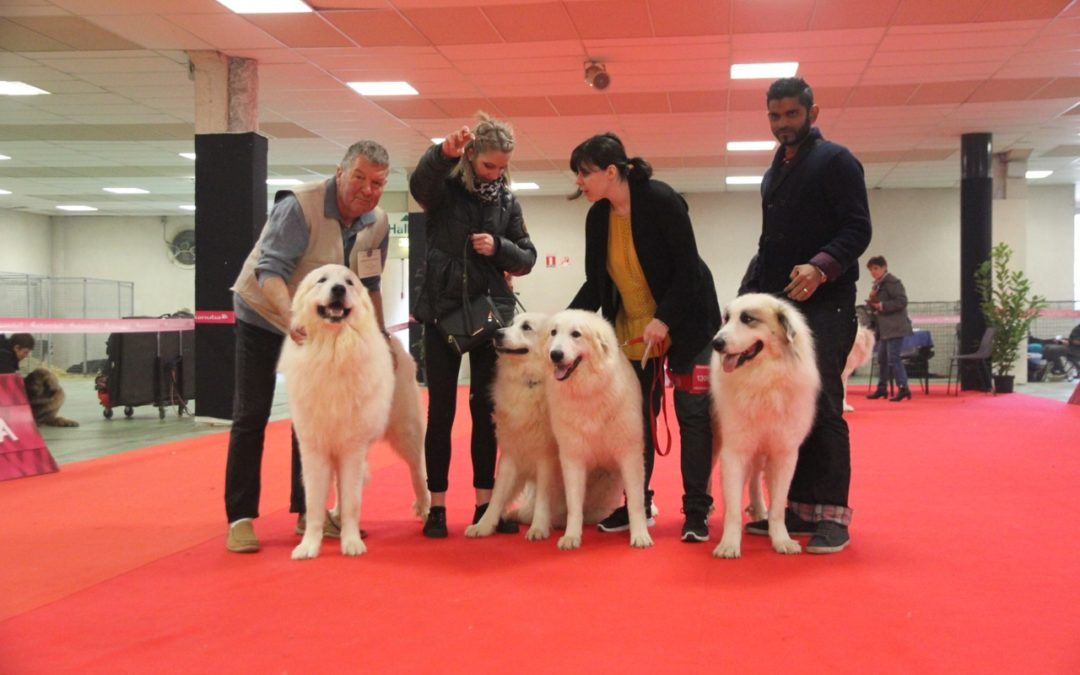Exposition Canine Internationale, Bourges 26 Février 2017