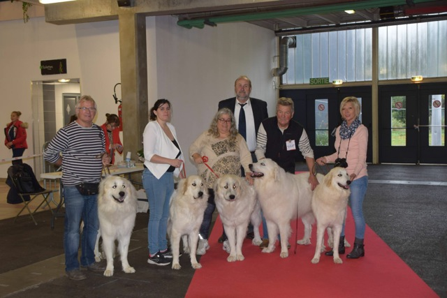 Exposition Canine Internationale, Saint-Etienne 28 Octobre 2018