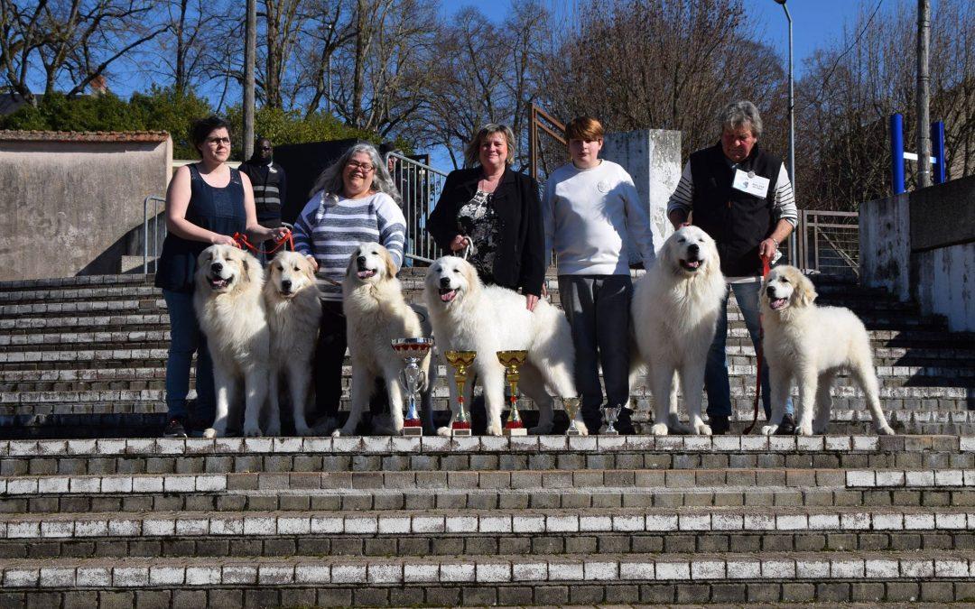 Exposition Canine Internationale, Bourges 17 Février 2019