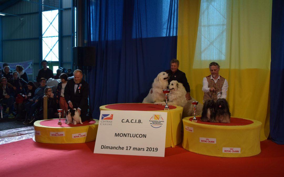 Exposition Canine Internationale, Montluçon 17 Mars 2019