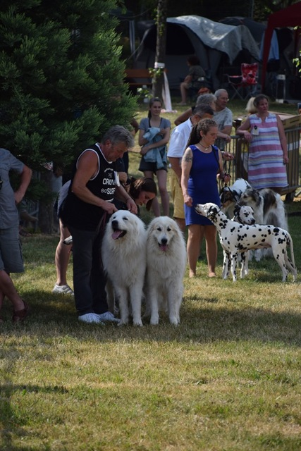 Exposition Canine Nationale, Aurillac 21 Juillet 2019