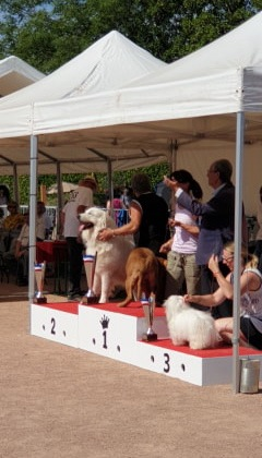 Exposition Canine Nationale, Châtel-Guyon 4 Août 2019