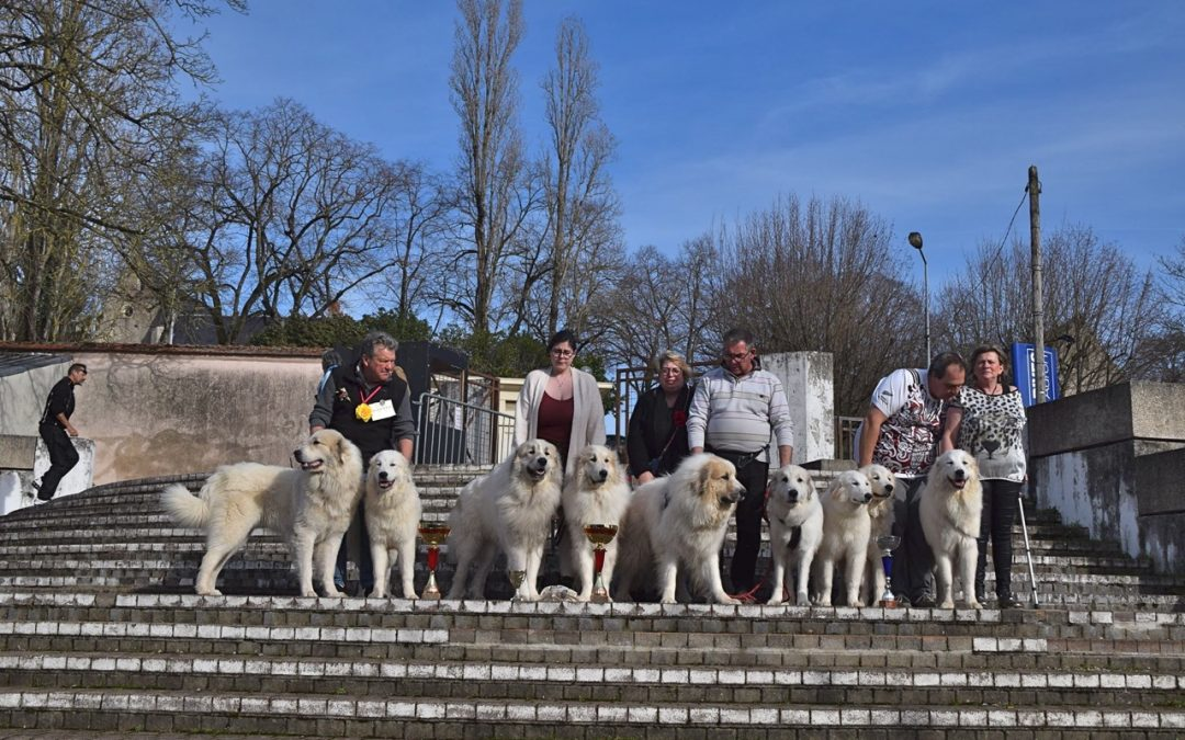 Exposition Canine Internationale, Bourges 16 Février 2020